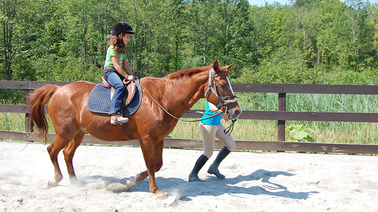 Morgan Farm Riding Lessons