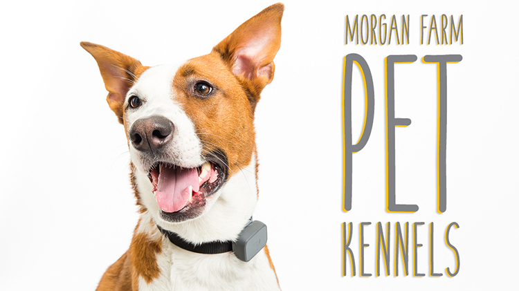 Morgan Farm Pet Kennels & Grooming