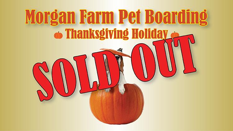 Morgan Farm Pet Boarding Thanksgiving Holiday